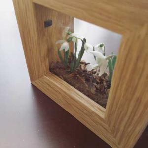 ガラス越しの箱庭、白き花に希望を。