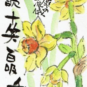 マミズマミーの絵手紙日和・黄水仙