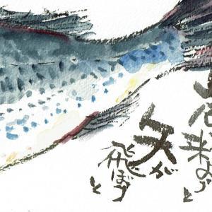 マミズマミーの魚日和・イサキ(右)
