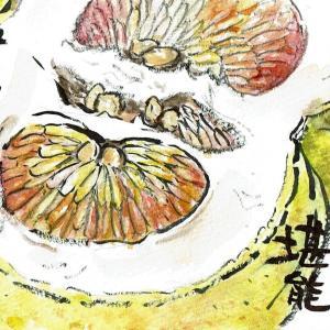 マミズマミーの果物日和・晩白柚