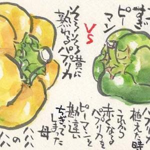 マミズマミーの野菜日和・ピーマン&パプリカ