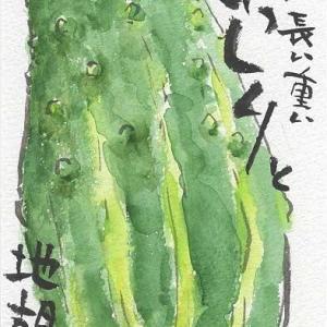 マミズマミーの野菜の日・地胡瓜