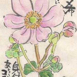 マミズマミーの絵手紙日和・秋明菊