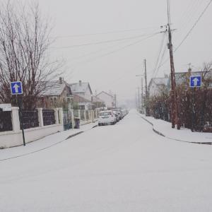 今日は雪…