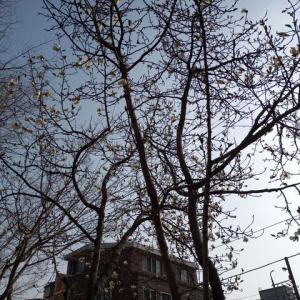 3月中旬プチョン(富川)大学の様子!キャンパスを歩いてみた!