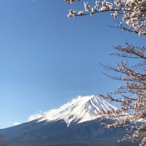 富士河口湖桜まつりクラフト 4日目