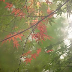 -秋の予感*写真撮影*仙台市泉区向陽台の一軒家貸切フォトスタジオ*富谷市-