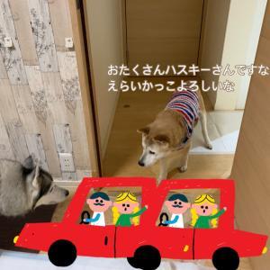 獅子丸トライアル開始!
