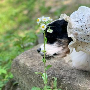 超びびり犬の成長