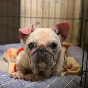 manahouse+dogでチャリティーバザー★