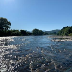 今年の米代川