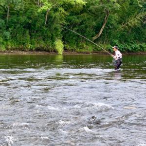 米代川の鮎釣り  続き!