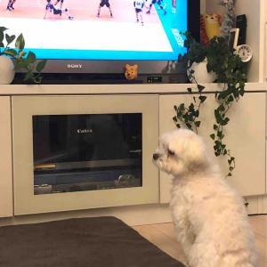 コスケはテレビが大好き
