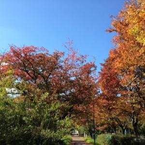 秋のクッキング♪
