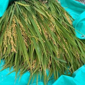 季節の花と最後の稲刈り