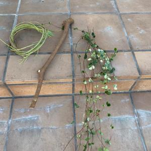 庭の植物と生き物