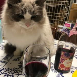 美味しい魚を握り寿司とワインで頂く!