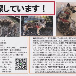 (新)【迷子犬】宮崎・三股町から迷子のバオちゃんを探しています!!