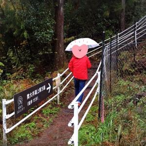 旅行二日目① 静岡県『奥大井湖上駅』(2017.11.23)
