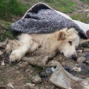人間の都合で捨てられた犬の最期は安楽死だった。彼の最期に何を思うのか?