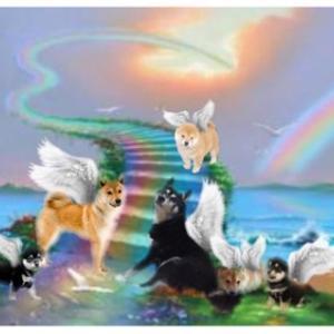 なんて健気で愛おしい光之犬 幸三郎へのプレゼント