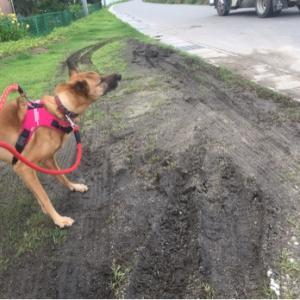 光之犬 お散歩189