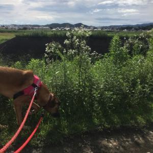 光之犬 お散歩190