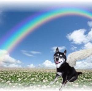 光之犬の隠し事