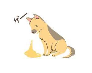 光之犬 不調からの甘えん坊