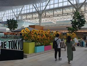 羽田空港 国際線ターミナルの装いと金浦空港の市外方面行きバス乗り場 in 2019年お盆