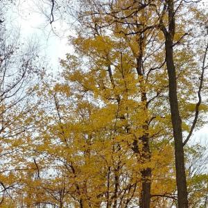 カナダ在住15年目、こんなに秋をエンジョイしたのは初めて