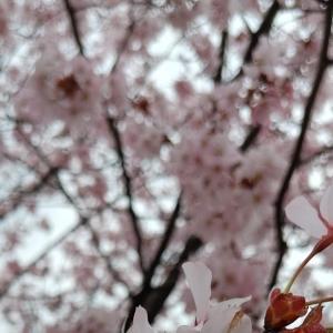 雨の日のEdwards Gardens