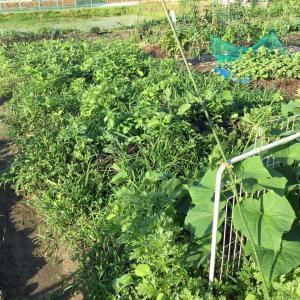 ♪野菜づくりと子育ての共通点?その3
