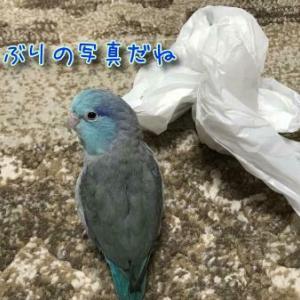 青いハート