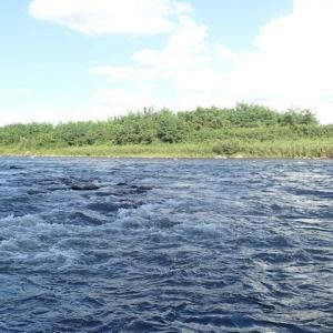 最盛期の米代川を満喫