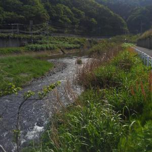 新潟~山形県境を彷徨ってみた