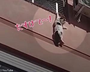 猫がビル4階で動けなくなった…勇気ある男性が救出
