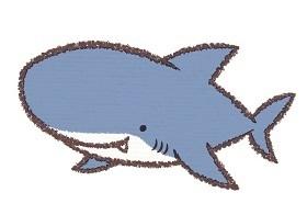 最も長命な脊椎動物はサメだった なぜ病気にならないのか、研究進む