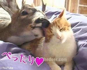 これほど猫を愛する…鹿がいるだろうか?