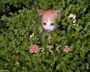 これは子猫天国…茂みに手を伸ばすと襲ってくる!