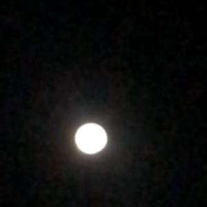 静かなる、月影のコハク