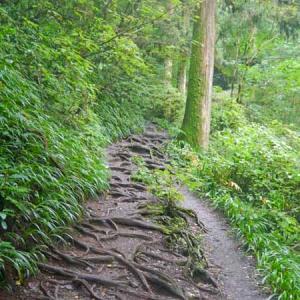 霧雨の高尾山を歩く