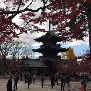 晩秋の京都散策 真如堂