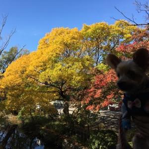 石神井公園へ☆