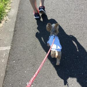 お散歩後のカット&シャンプー☆
