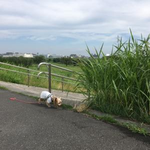 日曜日の朝散歩☆