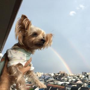 虹🌈と犬☆