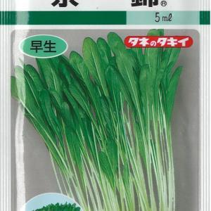 まだまだ種蒔き病が続きます、レタス、壬生菜など・・・