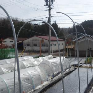 トマトの雨除けテントを設置しました