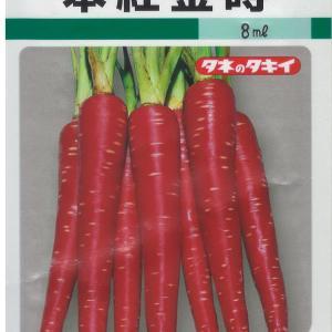 本紅金時初収穫【11/8】紅かおりは不本意な収穫【11/8】